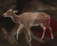 Axis Deer Dark