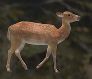 Axis Deer Orange