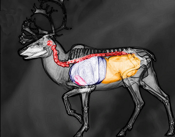 Reindeer shot scheme
