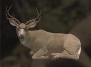 Mule Deer Blonde