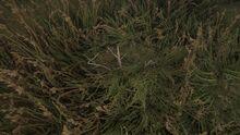 Disturbed vegetation