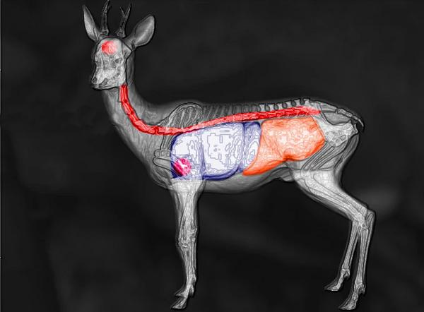 Roe deer shot scheme