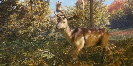 File:Fallow deer.jpg
