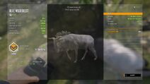 TheHunter Call of the Wild 20200719214753