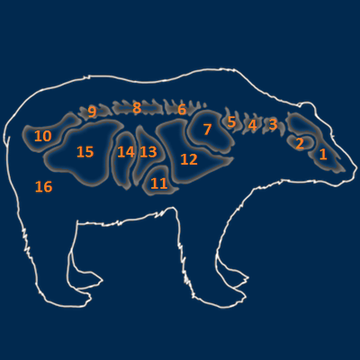 Brown bear organs