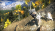 Wolf sc3
