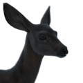 Sitka deer female melanistic
