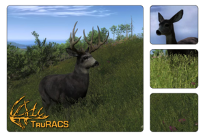 Species mule deer 700
