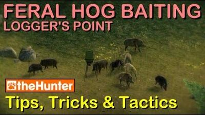 TheHunter Tips, Tricks & Tactics - FERAL HOG BAITING