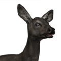 Roe deer female melanistic