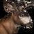 Blacktail deer male common
