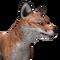 Red fox male common