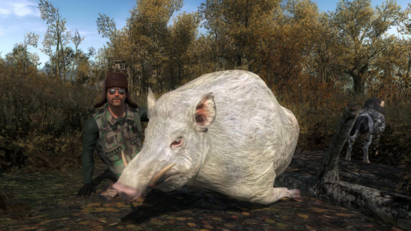 Taugor albino wildboar 1146