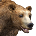 Brown bear male gold v1