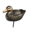 Decoy american black duck male
