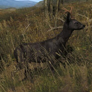 Species ROE B melanistic