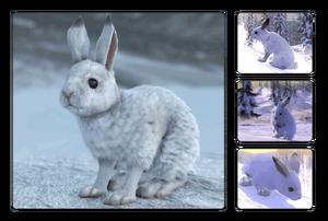 Species snowshoe
