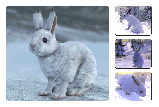 File:Species snowshoe.png