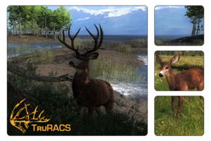 Species blacktail deer 700
