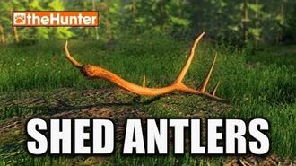 TheHunter Hunting Game - Shed Antlers