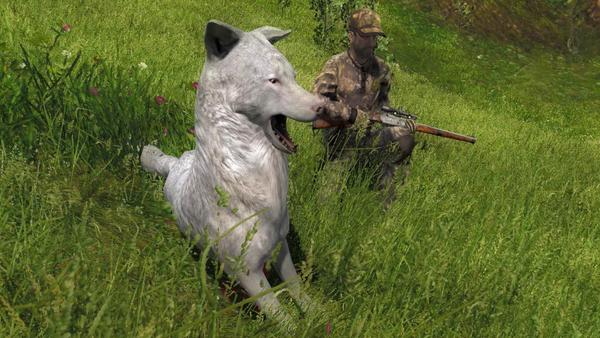 Yansk0 albino coyote 58