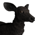 Rusa deer female melanistic