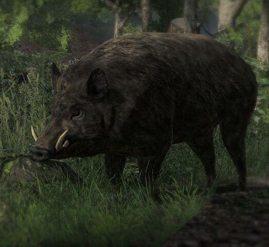 File:Feral hog boar close.jpg