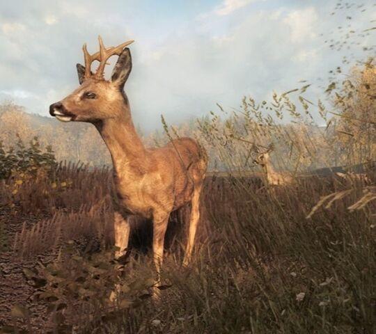 File:Roe deer buck.jpg
