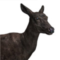 Red deer female melanistic