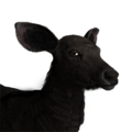 Sambar deer female melanistic