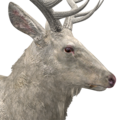 Rocky mountain elk male albino