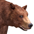 Black bear male cinnamon v1