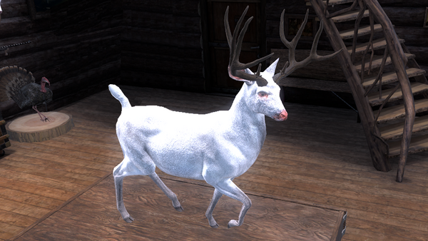 BCKidd albino blacktail 195