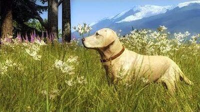 Dog tutorial - Labrador Retriever