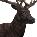 Red deer male melanistic