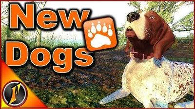 NEW DOGS German Short-Haired Pointers theHunter Classic
