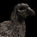 [CONCLUSA] Competizioni Ufficiali theHunterItaly - Fly Like a Pheasant - Fagiano 120?cb=20160304142450