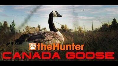 The Hunter 2014 Canada Goose