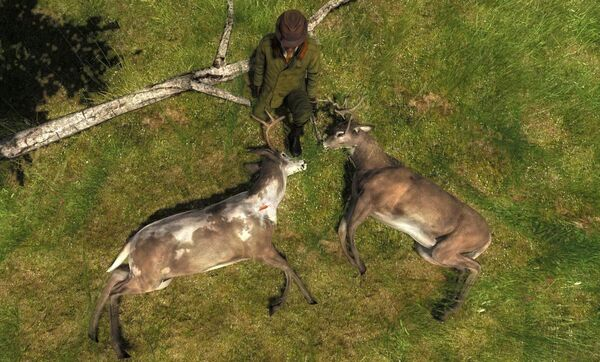 Hoocairs two rare whitetails