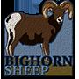 Bighorn sheep badge