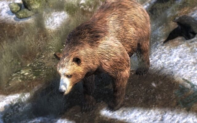File:Brown bear 950.jpg