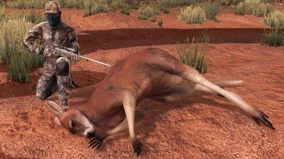 Trophy kangaroo
