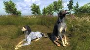 Coonhound light vs dark 1