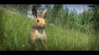 Conejo Europeo 341 m