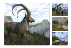 Species alpine ibex 700