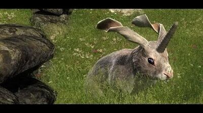 Non-Typical Rabbit in theHunter