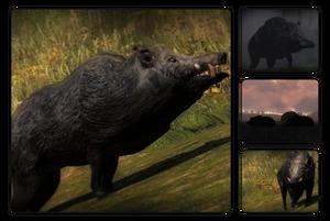 Species wild boar 700