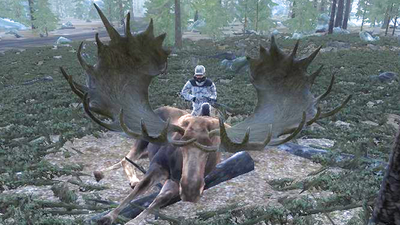 Trophy moose