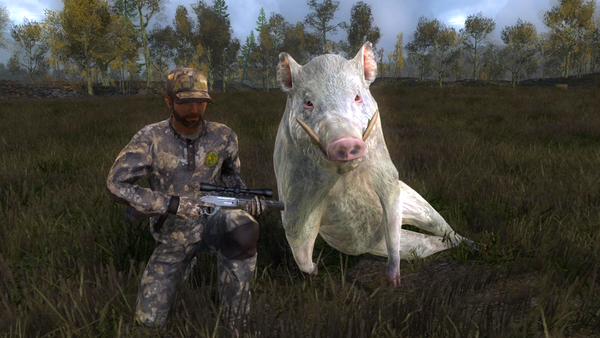 DreamHunter11 albino wild boar 1141