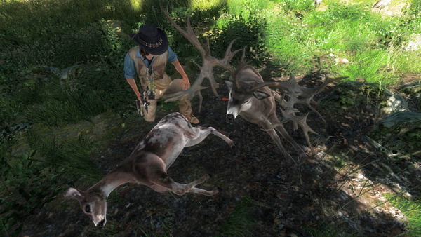 Coolfirell piebald and nt whitetail